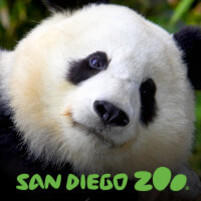 <!--2-->San Diego ZOO